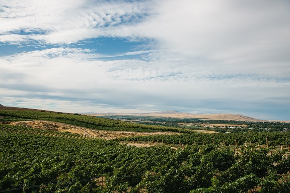 Overlooking vineyard in Yakima